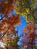 Fall day. Fall foliage in the Shenandoah Valley Virginia Royalty Free Stock Photos