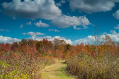 Fall Day Hiking Royalty Free Stock Photos