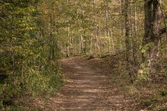 Wooded Path in the Fall. A fall day and a path in the woods Royalty Free Stock Images
