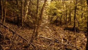 Wooded Path in the Fall. A fall day and a path in the woods Royalty Free Stock Photos