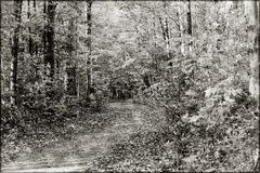 Wooded Path in the Fall. A fall day and a path in the woods Royalty Free Stock Photography