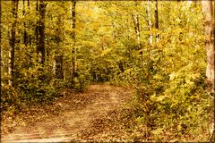 Wooded Path in the Fall. A fall day and a path in the woods Stock Photo