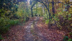 Wooded Path in the Fall. A fall day and a path in the woods Stock Photography