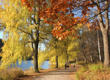 Fall day among the willows with dog Stock Images