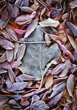 Fall dead leaves Royalty Free Stock Images