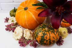 Fall decor with burgundy red lily and pumpkins royalty free stock photo