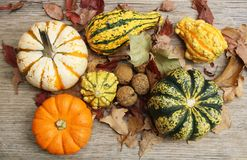 Fall Decor 5. Little pumpkins, gourds, sycamore seed balls and fall leaves arranged on a wooden background stock photo