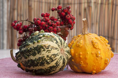 Fall decoration. Of home interior Royalty Free Stock Photos