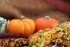 Fall decoration. Halloween gourds and indian corn autumn decoration stock photos