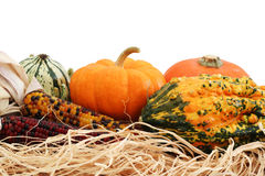 Fall decoration. Halloween gourds and indian corn on white background stock photo
