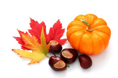 Fall decoration. Autumn decoration from pumpkin, colorful leaves and chestnuts stock photo