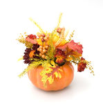 Fall Decoration. Isolated Against White Background Stock Images