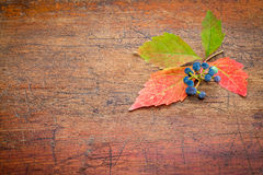 Fall decoration background Stock Photos