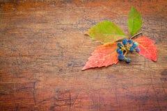 Fall decoration background Stock Photos