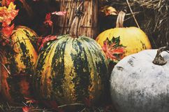 Decoration with colorful green and yellow pumpkins and hay Stock Photo