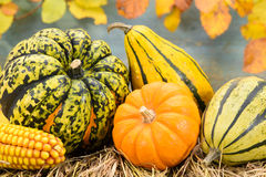 Fall decoration  with pumkin Royalty Free Stock Image