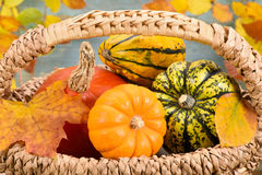 Fall decoration  with pumkin Stock Photography