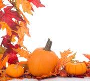 Fall Decoration Stock Photos