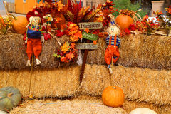 Fall decorations. Freshly picked fall multicolored pumpkins with scarecrow decorations Royalty Free Stock Images