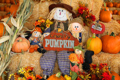 Fall decorations. Freshly picked fall multicolored pumpkins with scarecrow decorations and pumpkin sign Stock Photos