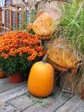 Fall Decoratives Royaltyfri Fotografi