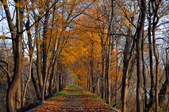 Fall on the Delaware. Fall on the towpath between the Delaware River, and the Delaware Raritan Canal Stock Photo