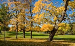 Fall in den Park Lizenzfreie Stockfotos