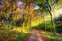 Fall in den Wald Stockbild