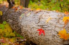 Fall in den Wald stockfotos