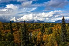 Fall in Denali Stock Images