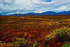 Fall of Denali National Park Royalty Free Stock Photos
