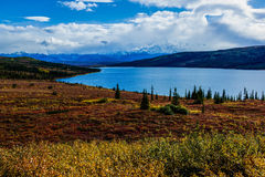 Fall of Denali National Park Royalty Free Stock Images