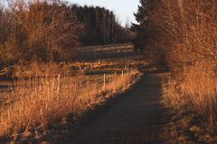 Fall in Denmark, country road . stock images