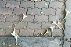 Fall der weißen Blume auf schmutzigen Ziegelsteinboden Lizenzfreie Stockfotos