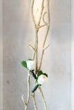 Fall der weißen Rosen auf der Koralle Lizenzfreie Stockfotografie
