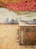 Fall detail, Aarhus University, Denmark. The all yellow brick walkways and walls of the architecture masterpiece with fall colors in the ivy. Bicycles are parked royalty free stock photos