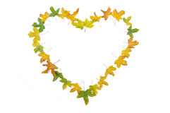 Fall details, leaves isolated in shape of heart an Royalty Free Stock Images