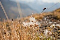 Fall in die Alpen, ahrntal ITALIEN lizenzfreie stockbilder
