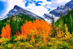 Fall in die Rockies Stockbild