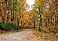 Fall dirt Roads Royalty Free Stock Photography