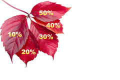 Fall Discount Royalty Free Stock Photography