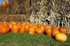 Fall Display. Display of pumpkins hay and cornstalk. Pumpkin farm,Clarence ,New York royalty free stock photo