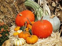 Fall Display Stock Photo