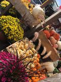 Fall Pumpkins and Flowers Seasonal Background. Fall display of chrysanthemums, pumpkins and gourds on wooden racks at outdoor market Royalty Free Stock Image