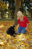 Fall Dog Stock Photo