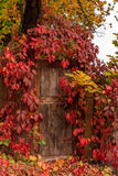Fall door. Old wood door surrounded by red leaves of shrubs in autumn Royalty Free Stock Photography