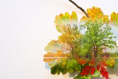 Fall double exposure in colorful leaves and trees. Illustration Stock Photos