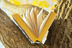 Fall dreams. Open book lying on a branch on a background of autumn park Royalty Free Stock Photo