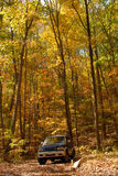 Fall Drive Royalty Free Stock Photography