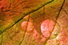 Fall droplets Royalty Free Stock Photos